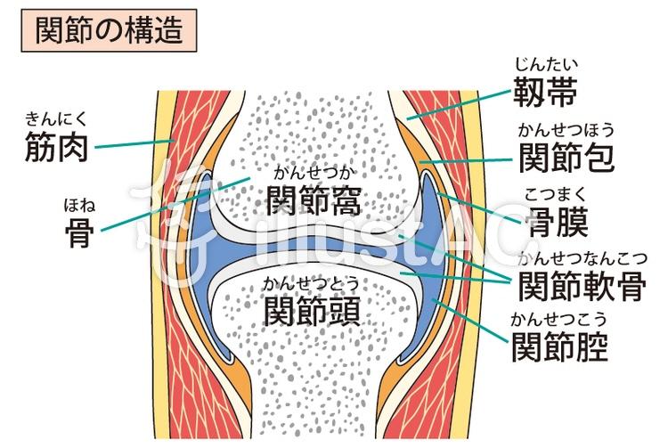 寝たきり老人さんの身体に起きていること ⑪ 関節拘縮の発生2:「拘縮」とは?医学的な定義から